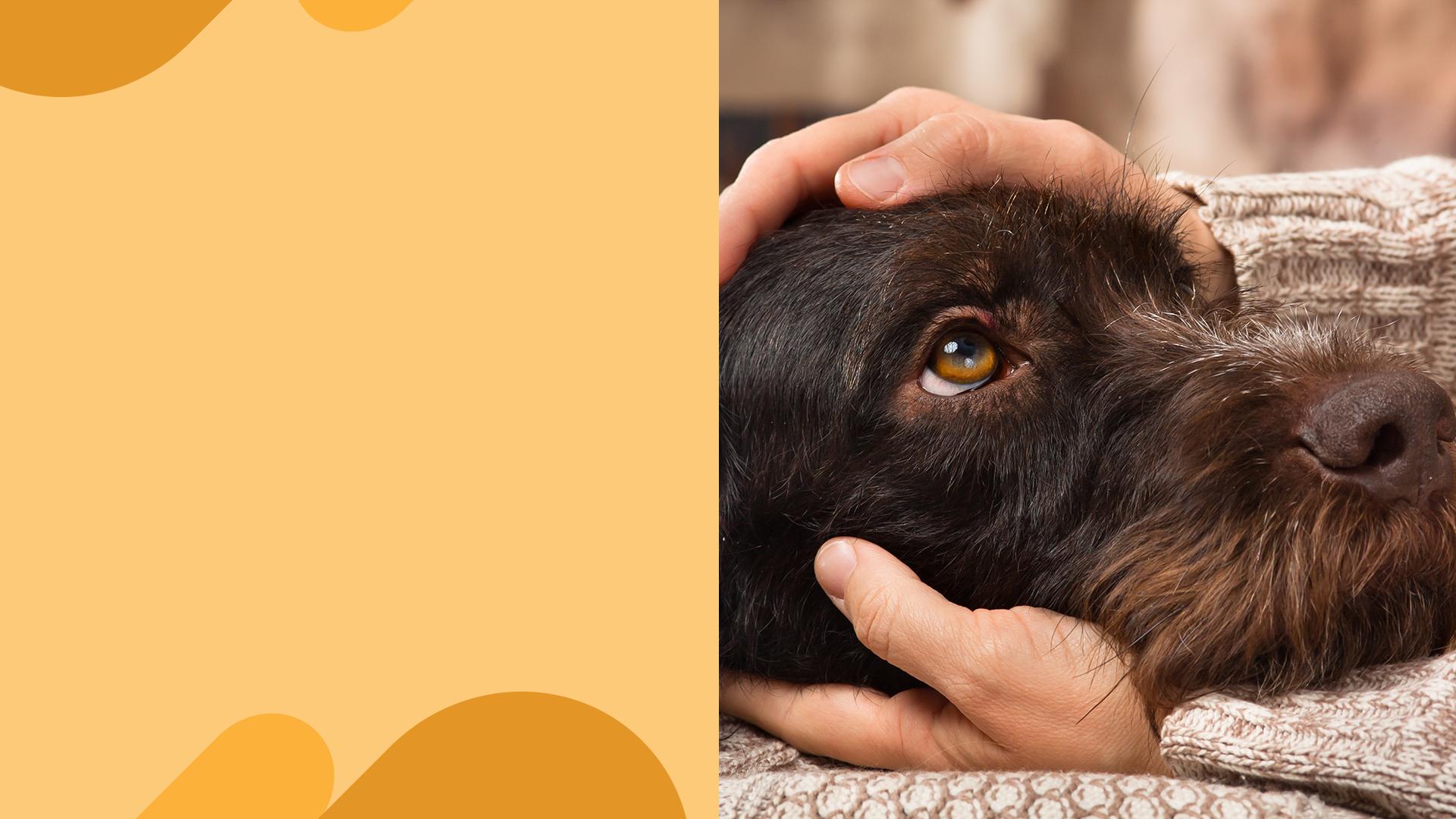Kæledyr og sclerose